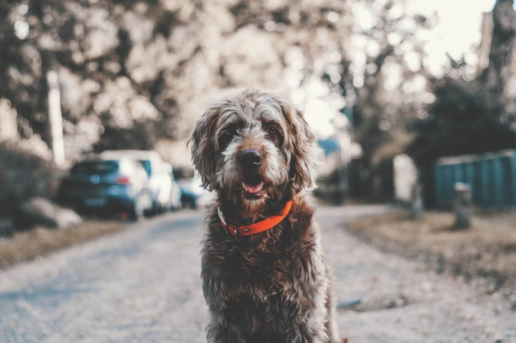 chien souriant